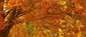 271186__nature-landscape-park-forest-trees-autumn-foliage-beauty_p